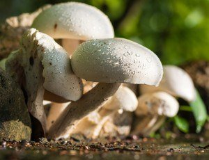 HOT in Culinary Travel: Wild Food Foraging | The Culinary Travel Guide