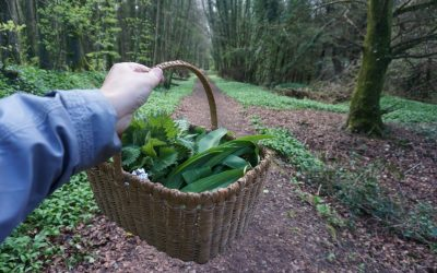 #foraging in ireland